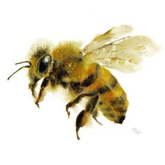 Honey Bee watercolor painting - Art Print. Nature Illustration. Honey Bee, Flying bee, Lovely Bee art