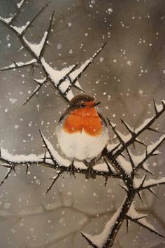 The robin - now officially Britain's national bird :-) my favourite