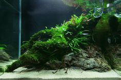 Favourites: tank byLukasz KrzywoszAnother beauty from The Art of Planted Aquarium 2015, Hannover