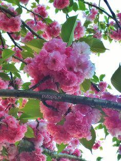 Spring in #Zagreb #Croatia