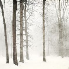 mist snow.