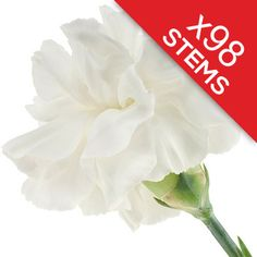 98 Classic White Carnations Send 98 long lasting white carnations http://www.MightGet.com/january-2017-12/98-classic-white-carnations.asp