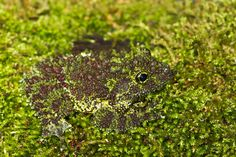 Animal camouflage: can you spot these masters of disguise playing hide-and-seek? - Telegraph