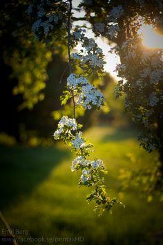 Flowers in Heavy backlight