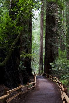 Redwoods, Muir Woods, California photo via lovelight