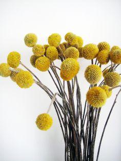 Yellow flower heads