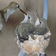 Hummingbird House, Set of 2
