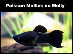 poisson-mollie-molly