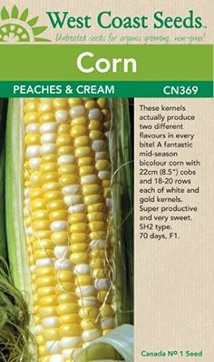 Corn Seeds - Peaches and Cream su F1 (approx. 40 seeds) W... https://www.amazon.ca/dp/B00KN6B5DW/ref=cm_sw_r_pi_dp_x_CDstzbE9Z5EW6