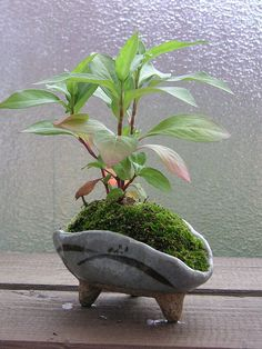 Tiny pot by ariari, via Flickr ::: I like the idea of making ceramics that conform to the needs of the plant. It doesn't have to just be a cylinder.