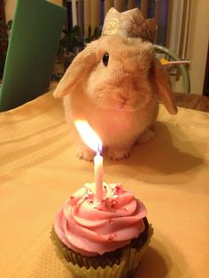 Bunny birthday! (Next month is her first Birthday! I am SO excited!!! It makes me want to cry!!)