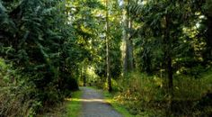 Explore more than 27 kilometres of forest trails, winding through the park's dense foliage.