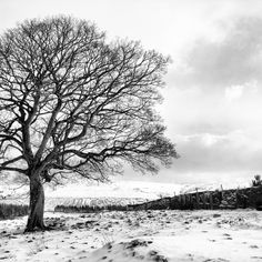 Solitary tree in a snowy landscape