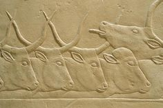 akg-images SAQQARA / TOMB OF KAGEMNI / CATTLESaqqara (Middle Egypt), Tomb of Kagemni – Mastaba 25 (Mastaba of the vizier Kagemni; Old Kingdom, early 6th dynasty, after 2347 BC). Cattle being moved through...