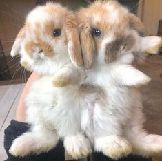 30 cute bunny pictures you have to see today Animals Gallery Ideas] Cute Bunny Pictures, Baby Animals Pictures, Animals And Pets, Bunny Pics, Bunny Images, Happy Pictures, Cute Baby Bunnies, Funny Bunnies, Cute Little Animals