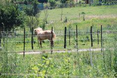 kôň, kobyla? Horses, Animals, Animales, Animaux, Animal, Animais, Horse