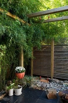 Bamboo Garden Design Ideas Bamboo Garden is an Oregon based nursery specializing in hardy clumping and hardy timber bamboo. We ship high quality bamboo plants nationwide. Our website is a useful resource for bamboo information Privacy Fence Landscaping, Large Backyard Landscaping, Backyard Privacy, Modern Landscaping, Backyard Designs, Landscaping Design, Backyard Patio, Garden Swing Sets, Wooden Garden Swing