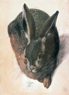 Hans Hoffmann 'Hare' 1528 watercolor and gouache on parchment by Plum leaves, via Flickr