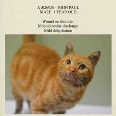 Pulled by Feline Rescue of Staten Island* NYC **Sweet & Adorable Boy**  TO BE DESTROYED 02/05/15 JOHN PAUL interacts with the observer, appreciates attention, is easy to handle and tolerates all petting.. ID #A1026920. Male org tabby dabout 1 YEAR STRAY https://www.facebook.com/nycurgentcats/photos/a.949753518375969.1073742583.220724831278845/949753638375957/?type=3&theater