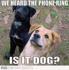 Yes, it's dog
