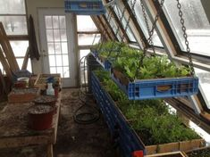 Garden photos and videos - passive solar greenhouse on Greenhouse Shelves, Diy Greenhouse Plans, Best Greenhouse, Greenhouse Effect, Greenhouse Interiors, Indoor Greenhouse, Greenhouse Gardening, Greenhouse Wedding, Greenhouse Panels