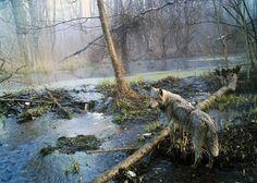 Chernobyl, natura selvaggia e lupi radioattivi.