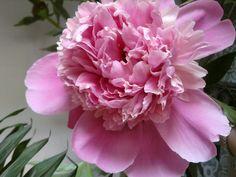 Vine , vine primăvara ! Da, în sfârșit . Este sezonul florilor , motiv pentru care provocarea de azi din cadrul evenimentului Miercurea fara...