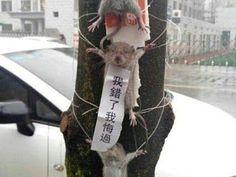 """""""O Grito do Bicho"""": Chineses torturam ratos"""