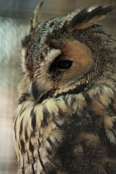I'm becoming more and more obsessed with owls! so pretty!