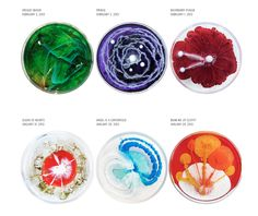 A Petri Dish Painting for Every Day of 2013