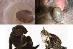 Receita natural e muito simples para livrar o seu animal de estimação das pulgas e carrapatos rápido e seguro.