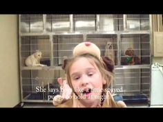 It's All About Them Spays, bout them spays....great music video by Spring Hill Animal Clinic....love it!