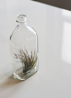 Large Lab Bottle with Air Plant // Apothecary Airplant by toHOLD, $26.00