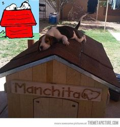 Snoopy in real life…