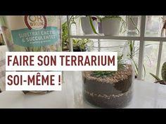 Aquarium Terrarium, Succulents, Plants, Food, Succulent Plants, Essen, Meals, Plant, Yemek