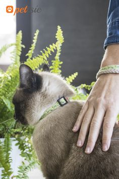 Matching Friendship Bracelet With Your Kitty Cat Collar Made Of Cotton Is One The Most Comfortable Collars Can Wear