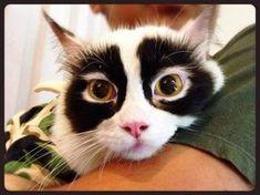 was´n Augen-Makeup!