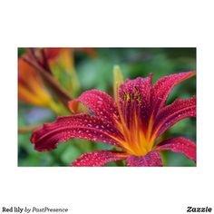 Tiger Lily Flowers, Red Lily, Custom Posters, Dog Design, Custom Framing, Art Reference, Creative, Artwork, Prints