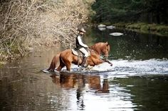 Gredos a Caballo - Byron disfrutando del agua del Tormes