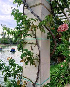 """509 curtidas, 46 comentários - Por Diana Schrok (@historiasdadi) no Instagram: """"Vocês sabiam que em Buenos Aires existe um jardim só de rosas!? Se chama El Rosedal. Que lugar…"""""""
