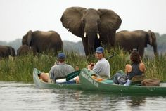 By safari jeep or by canoe, there are tons of ways to see wildlife in Africa. Chutes Victoria, Safari Jeep, Safari Adventure, Adventure Style, Thinking Day, All Nature, African Safari, African Animals, Adventure Is Out There
