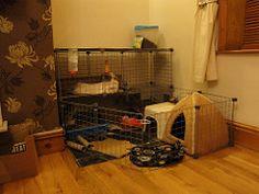 new ideas for rabbit setups | ... home (Roseygogs) Tags: rabbit bunny indoor…