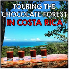 Touring the Chocolate Forest in Puerto Viejo, Costa Rica