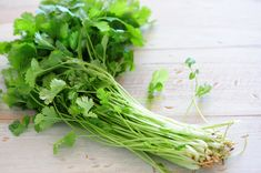 Know the complete details about cilantro. Health benefits of cilantro, nutrition facts, and scientific name. The advantages of eating cilantro. Growing Herbs, Growing Vegetables, Growing Coriander, How To Grow Coriander, Les Parasites, Toxic Foods, Agriculture Farming, Curry, Body Detox