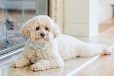 Cute wedding dog idea - dog with teal + white bow tie {shoreshotz photography}