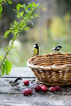 Sweet country living, little birds feeding. Pretty Birds, Love Birds, Beautiful Birds, Beautiful Pictures, Country Charm, Country Life, Country Living, Country Roads, Belleza Natural