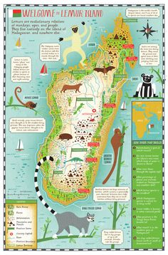 """Island of Lemurs: Madagascar"" Educator Guide by Scholastic!"