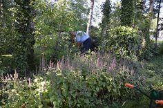 Agastache envahissante et jardinier adorable