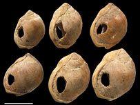 Cuentas de collar realizadas sobre caparazones de molusco (Nassarius Kraussianius)perforados, hallados en Blombos Cave (Suráfrica). Estan consideradas como los primeros adornos humanos conocidos. Paleolítico Medio.