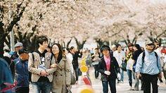 Chi phí du học Hàn Quốc 2015